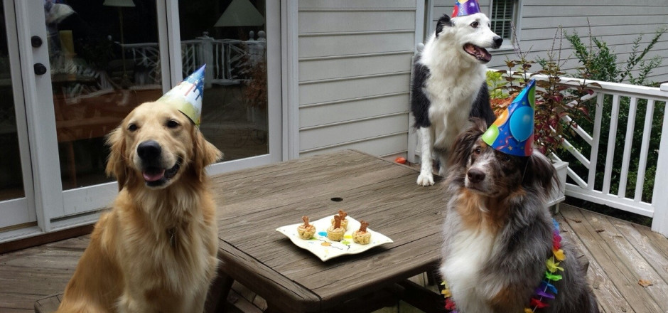 funny-dog-birthday-party-pictures
